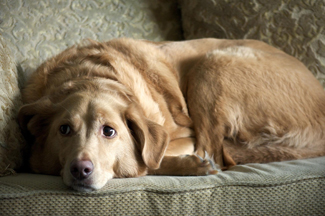 A photograph shows a sad-looking dog.